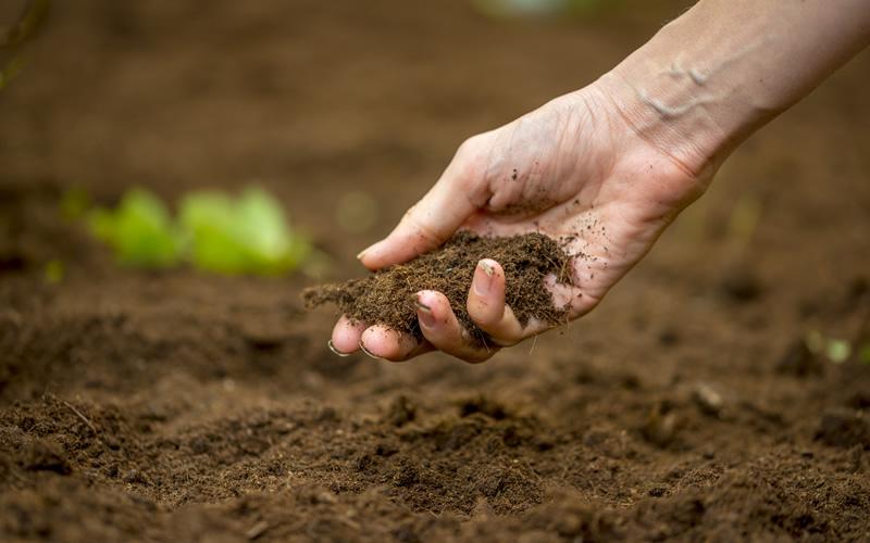 8 soļi auglīgākai dārza augsnei